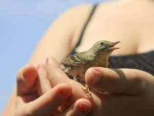The Baby Birdie